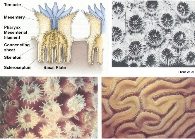 Ta Marine Science Coral Anatomy Types Of Coral Reproduction M1