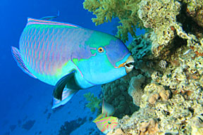 ta marine science threats to coral reefs m1